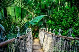 red het regenwoud