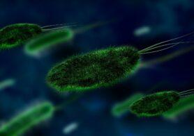 bacterie biologie onderzoek